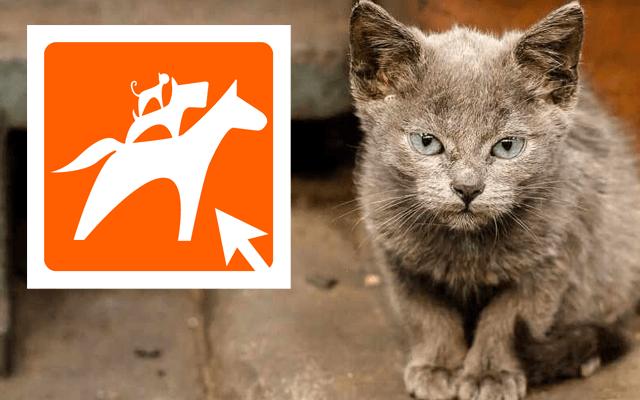 Animal Webaction